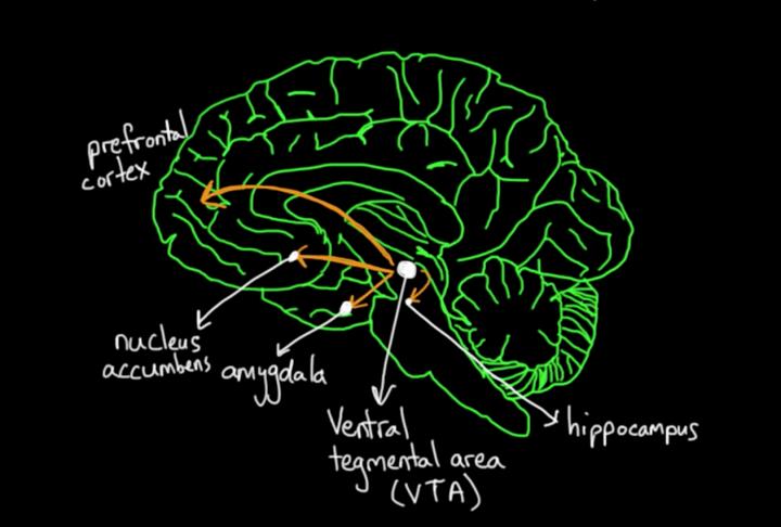 Product Psychology: How our brain processes rewards?