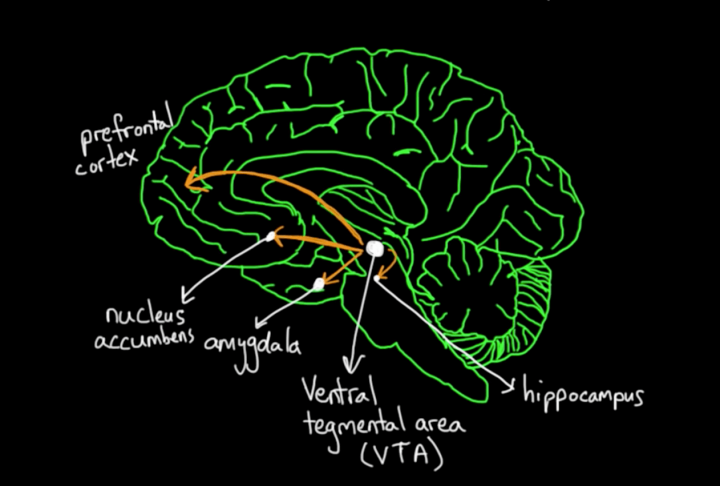 Product Psychology: How our brain processes rewards?