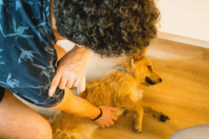 User interviews with dogs are more relaxing