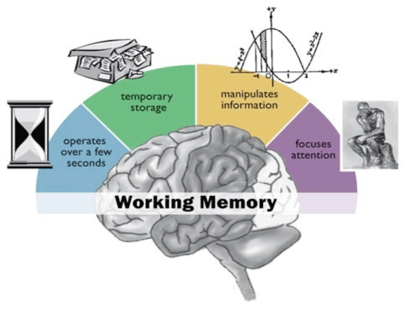 Human Attention Working Memory